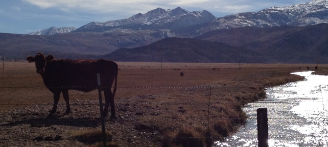 Photos that inspired my new book, Convincing the Rancher