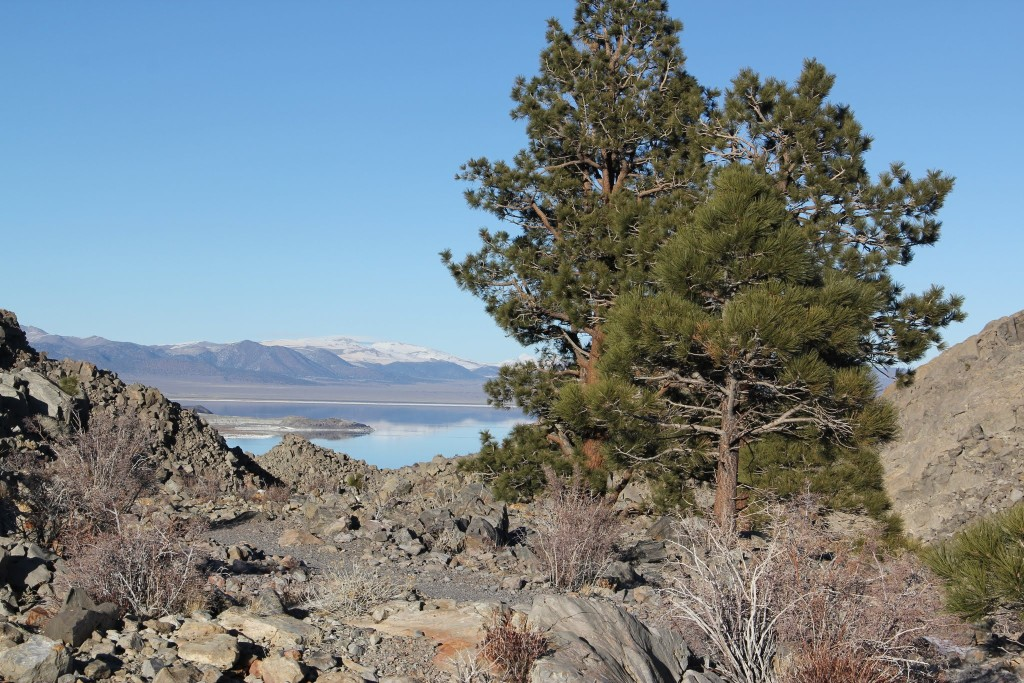 Trees and mono lake view