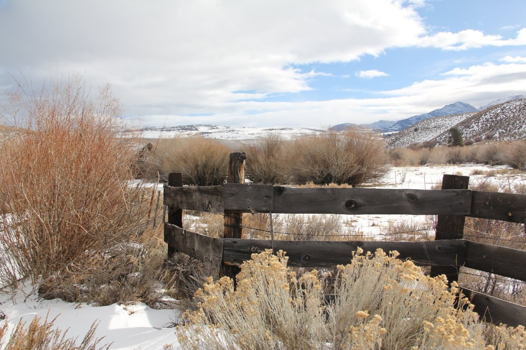 plank fence, sagebrush snow