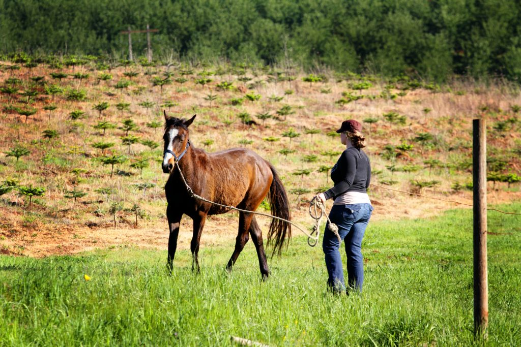 woman working with horse